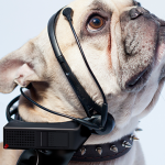 No More Woof: Raspberry Pi to translate dog thoughts to human speech